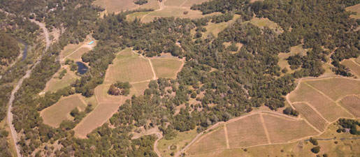 aerial photo ridgeline vineyard