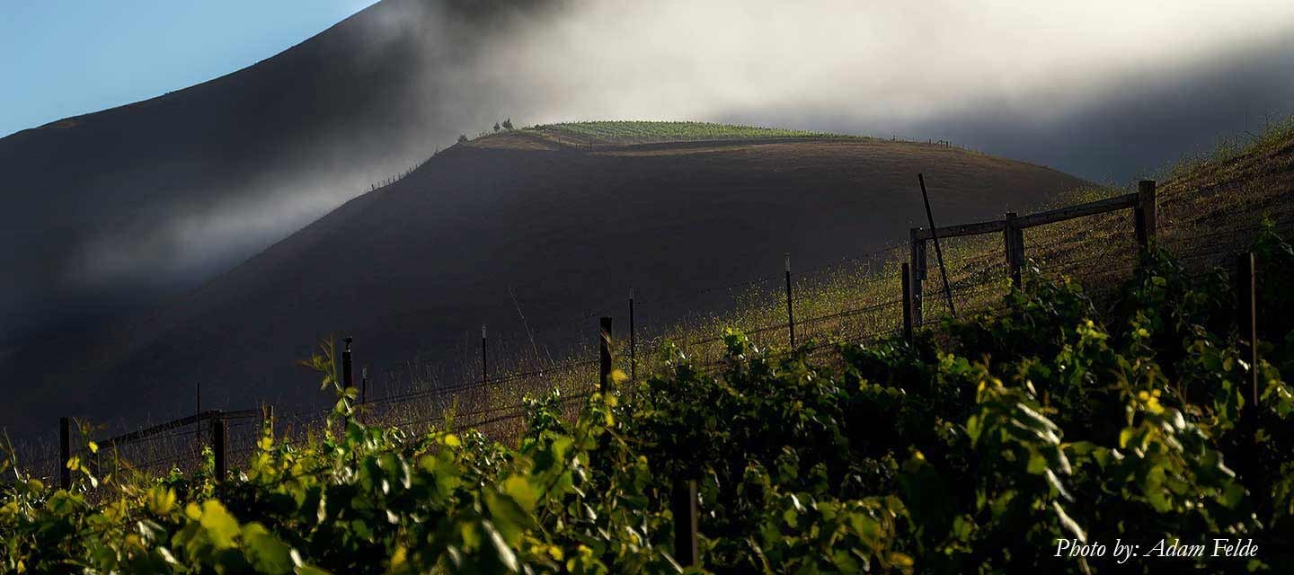 Migration Bien Nacido Vineyard Feature Image