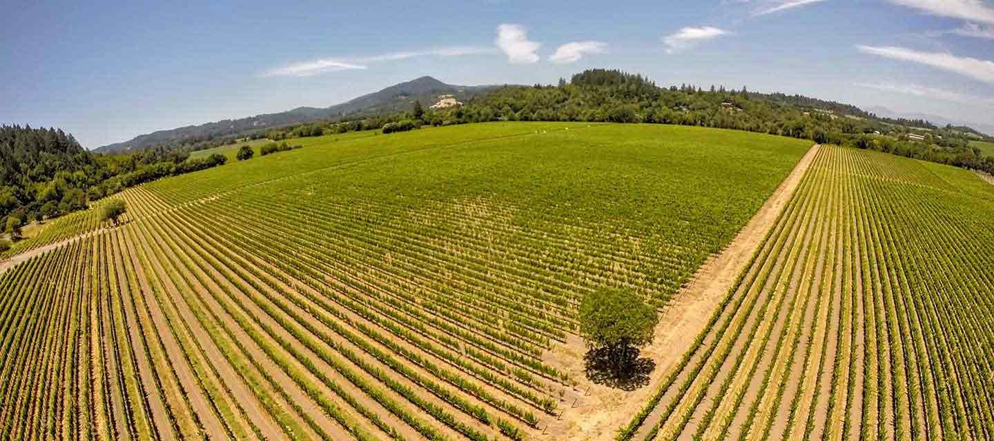 Migration Running Creek Estate Vineyard Feature Image